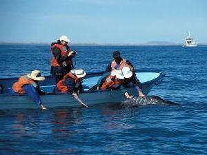 Mit dem Pangaboot zu den Grauwalen