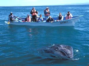 Baja California Puerto Lopez Mateos Waltour Mexiko