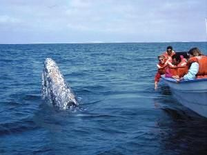 mexiko-baja-california-puerto-lopez-mateos-whale-watching
