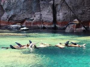 Seelöwen Espiritu Santo Baja California