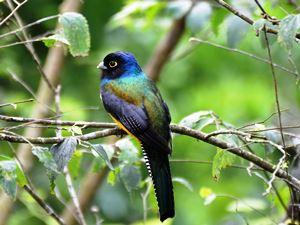 Vogel im Reservat