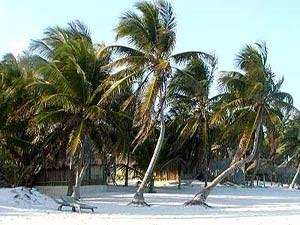 Mexiko Urlaub Palmenstrand Yucatan