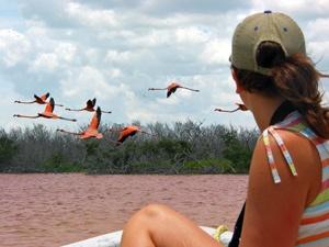 Planschen mit rosa Flamingos am Rio Lagartos