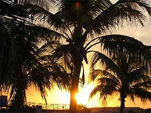 kuba-sonnenuntergang-palmen