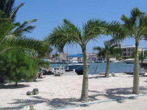 Palmen und weißer Sand auf der Insel