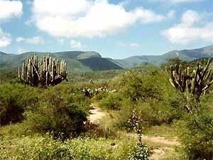 Mexiko-Kakteen-Zapotitlán
