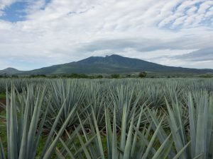 Jimador Agavenfeld Vulkan Tequila Mexiko