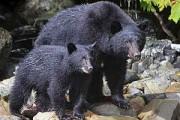 Rondreis 3: Langs beren, meren en bossen