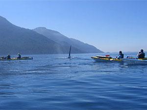 Kayakken met de walvissen