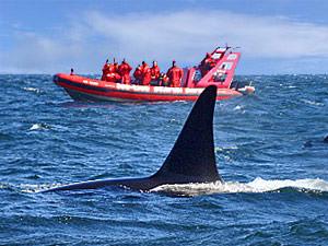 Aan boord: whale watchen