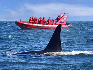 Canada reizen: Orka