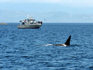 Reizen Canada: walvissen kijken