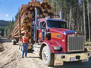 Canada reizen: houtindustrie