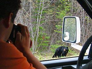 Reizen Canada: beren Tofino