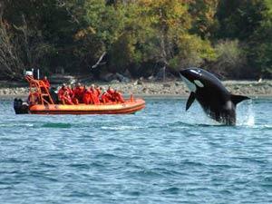 Orka's spotten bij Vancouver Island