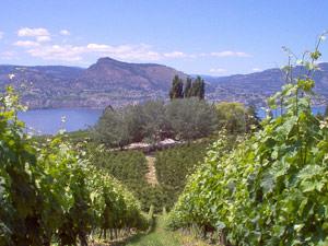 Canada wijnstreek: Okanagan Valley