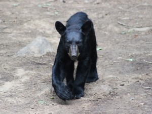 oost-canada-sacacomie-zwarte-beer