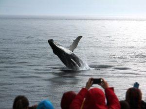 Walvis aan bakboord