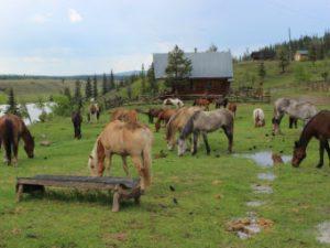 paardrijden in Canada