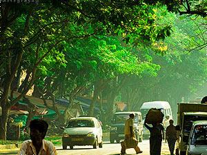 Grüne Straße in Bangalore