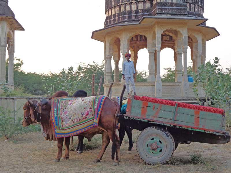 Rundreise durch Nordindien: Tour mit dem Ochsenkarren durch Barli Fort