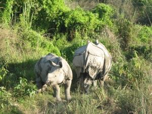 Nashörner im Chitwan Nationalpark bei Nepal Rundreise mit Indien