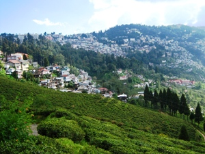 Landschaft der Hill Station Darjeeling