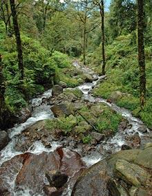 Unberührte Natur in Sikkim.