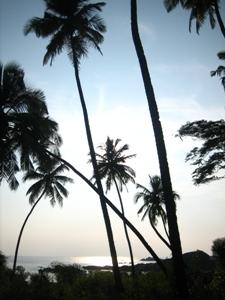 Palmen am Strand von Goa - Indens Sonnenuntergänge