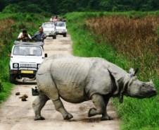 Auf Nashorn-Safari im Kaziranga Nationalpark