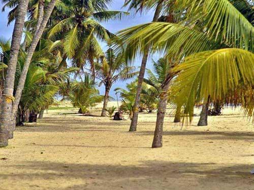 Sandstrand und Palmen am Marari Beach in Südindien.