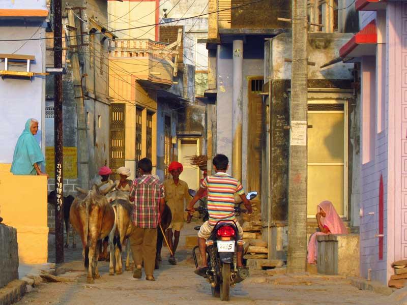 Rajasthan Rundreise: In den Straßen von Narlai geht es geruhsam zu.
