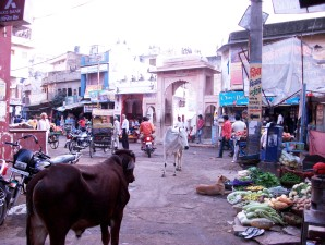 Heilige Kuh auf dem Markplatz in Pushkar