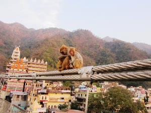 Affen auf der Lakshman Jhula Brücke in Rishikesh