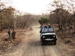 Jeep- Tour im Sasan Gir Nationalpark