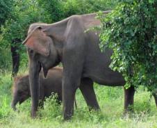 Silktour von Mysore nach Kerala