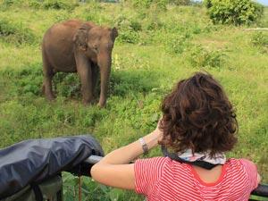 Elefant während Jeep-Safari in Südindien