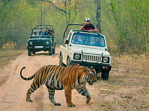 Tiger-Safari im Ranthambore Nationalpark