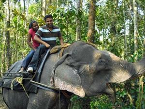 Touristen auf dem Rücken eines Elefanten in Periyar