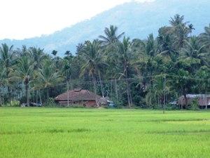 Landschaftsbild in Wayanad