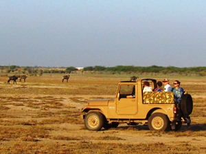 Jeep-Safari bei Dasada in Gujarat in Indien