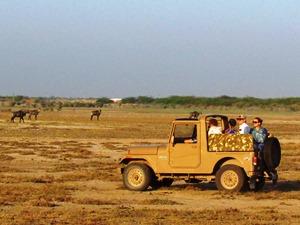Jeep- Safari im kleinen Kutch bei Dasada