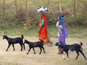 Frauen mit Ziegen im indischen Rajasthan