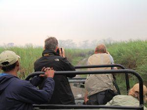 Elefanten in Kaziranga