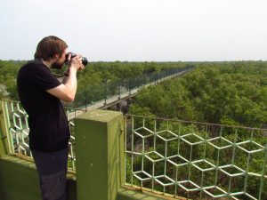 Fotograf Mangroven