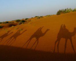 Kamel Schatten