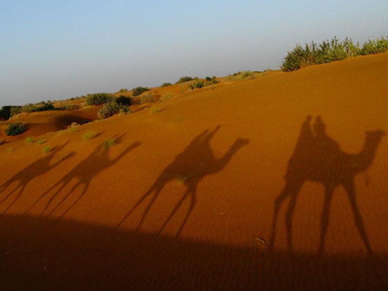 Kamel-Trek mit Schatten in der Wüste von jaisalmer bei Rundreise durch Indien