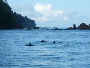 Costa Rica reis: dolfijnen