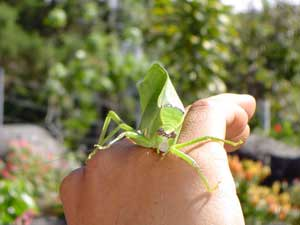 Bijzondere dieren in Boquete Panama