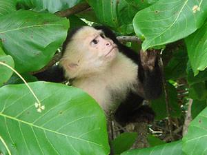 Individuele rondreis Costa Rica